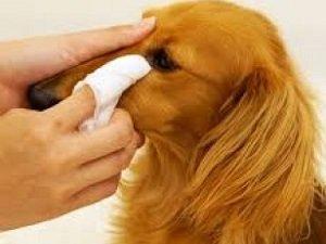 чем промыть глаза собаке