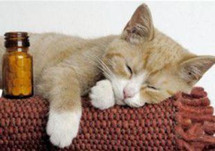 Какие глистогонные средства необходимо давать кошкам для избавления от паразитов?