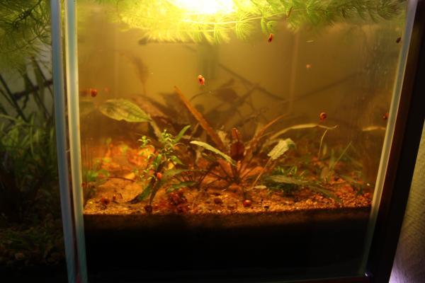 Мутная вода в аквариуме