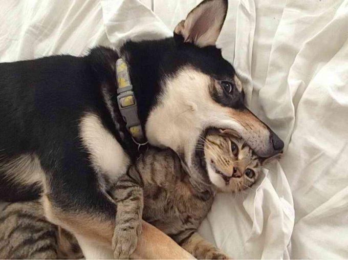 безумная любовь собаки к кошке
