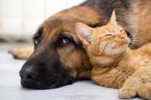 Домашним собакам и кошкам следует раз в квартал проводить дегельминтизацию, чтобы они не стали источником заражения