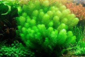 Как правильно выбрать растения для аквариума новичку-любителю?