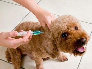 комплексная прививка с бешенством для собак
