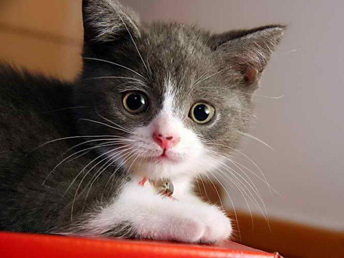 здоровый котенок при сухости носа