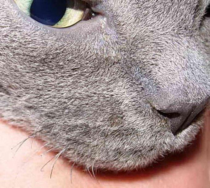 почему у кошки выпадают усы