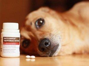 мочекаменная болезнь у собак диета