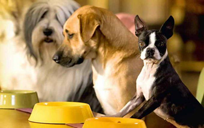 собаки ждут кормления