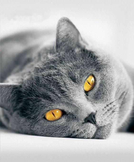 здоровье десен у кошки