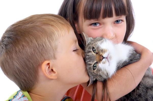 Лишай у кошек: передается ли эта болезнь человеку?