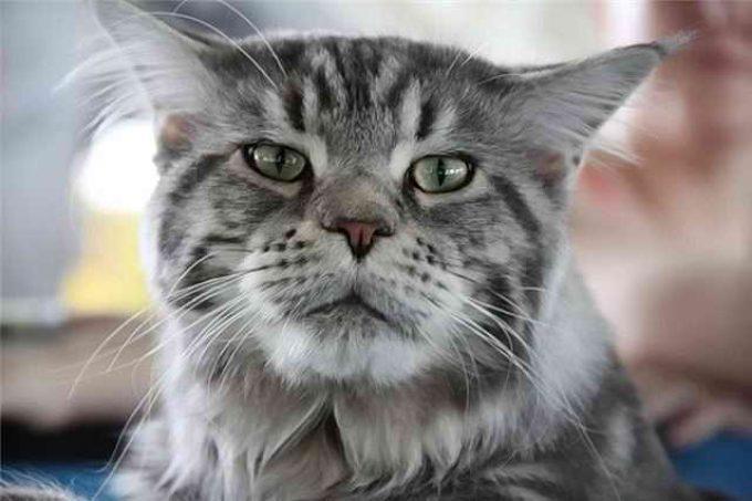 признаки инсульта у кошки