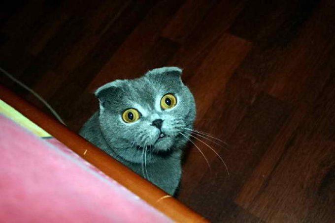 внезапный взгляд кошки