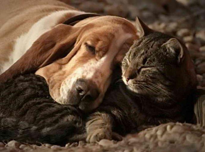 что сделать, чтобы кошка с собакой не дрались